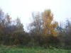grster_20121110_005