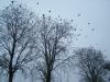 grster_20121110_006