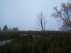grster_20121110_010
