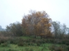 grster_20121110_028