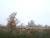 grster_20121110_030