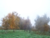 grster_20121110_033
