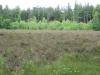 Landschapje met heide