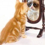 cat_mirror_grumpy